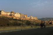 Elephants in front of the Amber Fort near Jaipur, Rajasthan, India