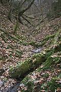 Elpu stream (Elpu strauts) and fallen trees in its ravine, Gauja National Park (Gaujas Nacionālais parks), Latvia Ⓒ Davis Ulands   davisulands.com