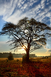 Stock photo of the sun rising behind a lone tree in a field