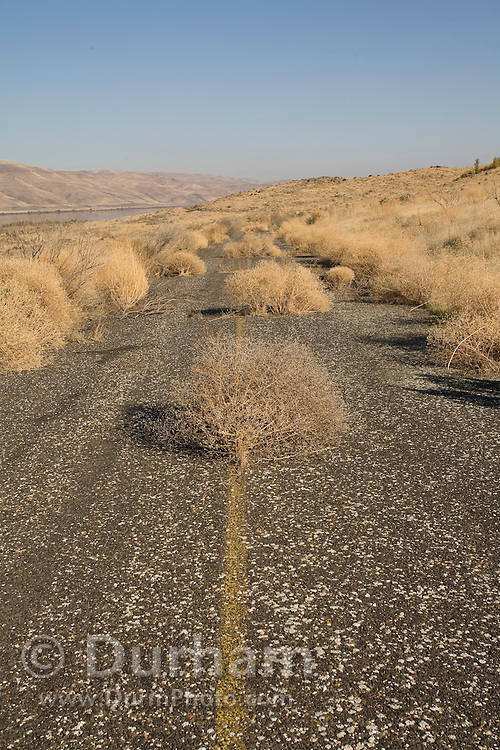 An old highway in the Columbia River Gorge National Scenic Area, long since abandoned and replaced by nearby I-84.
