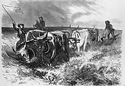 Pioneer farmers ploughing the prairies beyond the Mississippi with a team of oxen. Engraving c1855.