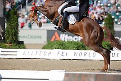 Hans Peter Minderhoud (NED) and Exquis Nadine having a awkward moment during the test<br /> Alltech FEI World Equestrian Games <br /> Lexington - Kentucky 2010<br /> © Dirk Caremans
