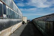 COVIBIO, COLLECTIVE wine producers , Italy, Liguria