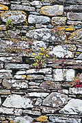 Dry stone wall of a Franciscan friary built 13th and 17th Century, Timoleague, County Cork, Ireland