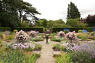 Rosa 'Ballerina' and Delphinium around York stone paving in Sylvia's Garden at Newby Hall, Ripon, North Yorkshire, UK