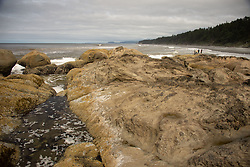 Eroded Sandstone Sea Stacks, Kalaloch Beach 4, Olympic National Park, Washington, US