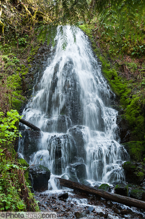 Fairy Falls (~20 feet high) is an unnamed tributary to Wahkeena Creek in Columbia River Gorge National Scenic Area, Oregon, USA.