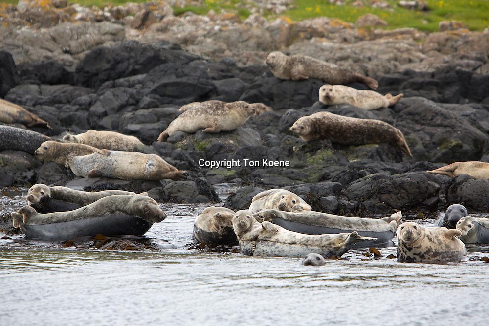 seals in Belfast's harbour