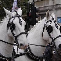 United Kingdom, England, London. The Lord Mayor's Procession 2010.