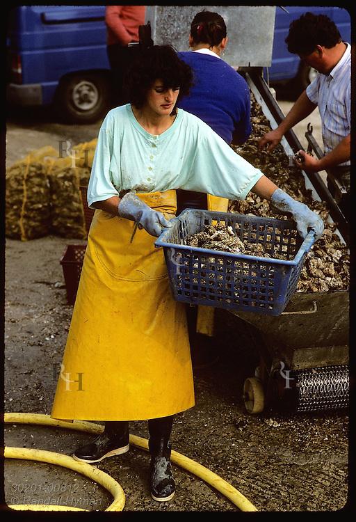 Oysterwoman carries bin of Japanese oysters at family processing station (chantier); Crach River. France