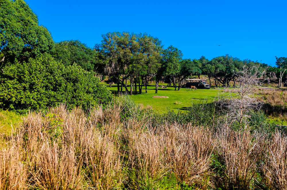 Kilimanjaro Safaris, Disney's Animal Kingdom, Walt Disney World, Orlando, Florida USA