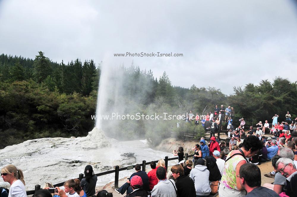 New Zealand, North Island, Rotorua, The Te Puia Geothermal Cultural Experience, Pohutu Geyser Tourists await the eruption