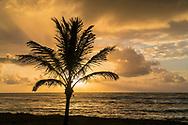 Clouds and sunbeam behind Palm tree at sunrise, Kapa'a, Kauai