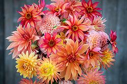 Vase of mixed dahlias