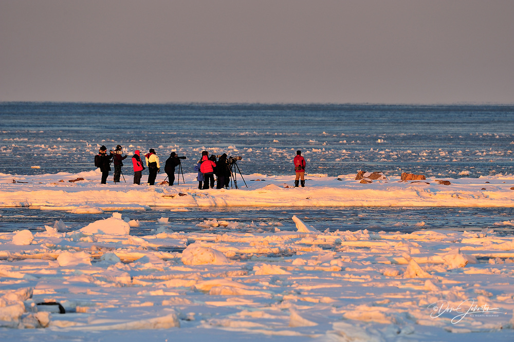 Photographers and guides hiking in the tundra outside the lodge compound, Seal River Heritage Lodge, Churchill, Manitoba, Canada