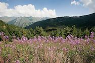 Wild flowers on the trail from Çeremi to Dobërdol, Peaks of the Balkans trail, Albania © Rudolf Abraham