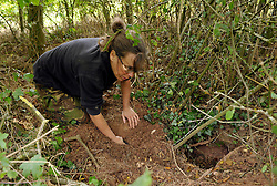 © Licensed to London News Pictures. 08/09/2013.  Gloucestershire, UK.  Campaigner Lynn from Stop the Cull checks near badger setts to see if the cull team have baited them with peanuts to draw the badgers away from the sett entrance so they can be shot. The Government has licensed a pilot badger cull in parts of Somerset and Gloucestershire as part of efforts to reduce bovine tuberculosis in cows on farms. Campaigners say the cull is inhumane and will not eradicate bovine tuberculosis.  08 September 2013.<br /> Photo credit : Simon Chapman/LNP