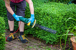 Trimming a low box hedge using an electric hedge trimmer