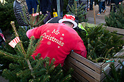 A Christmas tree stall holder dressed up in a red top looks for more fir in a box full of fir. Columbia Road flower market is held every Sunday and it attracts shoppers from afar. The huge variety in plants and flowers makes it a popular place to shop and the banter between the traders and the quick deals there is to be made makes it a very entertaining place to go.