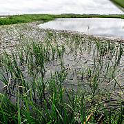 Nederland Zevenhuizen 28 mei 2006 20060529 Foto: David Rozing .Snoekpaaiplaats bij de Noordoever van de Zevenhuizerplas. Deze paaiplaats is onderdeel van een recreatiegebied van het recreatieschap Rottemeren. De paaiplaatsen geven een extra dimensie aan de natuurbeleving, omdat het natte gebied kansen biedt voor tal van bijzondere flo en fauna..Snoek krijgt ruimte om te paren .Als eigenaar van wateren en als waterkwaliteitsbeheerder hecht het hoogheemraadschap veel waarde aan een goede visstand. Een goede visstand heeft immers een positief effect op de waterkwaliteit. Het hoogheemraadschap houdt de hoeveelheid vis per hectare wateroppervlak in de gaten en werkt ook aan de samenstelling van de visstand. Een vis die zeer gewenst is, is de snoek. Hij is populair omdat hij een teveel aan witvis (prooivis) voorkomt. Snoek plant zich echter alleen voort op stukken ondergelopen land dat vol staat met  waterplanten. Dergelijke gebieden zijn in het beheersgebied niet of nauwelijks aanwezig. In 2005 heeft het hoogheemraadschap daarom meegewerkt aan de aanleg van twee snoekpaaiplaatsen: in de Bergse Plassen in Rotterdam en bij de Noordoever van de Zevenhuizerplas in Zevenhuizen-Moerkapelle..Op beide locaties kan een deel van het land van maart tot juli onder water worden gezet. In het vroege voorjaar trekken de snoeken dan het paaigebied in om er eitjes af te zetten. De geboren snoekjes blijven de eerste tijd in het paaigebied. Als het water weer van het land wordt gelaten, zwemmen de kleine snoekjes de plas in..Serie tbv Schieland en de Krimpenerwaard, deze zorgt als waterschap voor droge voeten en schoon water in een bepaald gebied. Het beheersgebied van Schieland en de Krimpenerwaard strekt zich uit tussen Rotterdam, Schoonhoven en Zoetermeer en is het laagste gebied in Nederland. Binnen dit gebied zorgt Schieland en de Krimpenerwaard voor de kwaliteit van het oppervlaktewater, het waterpeil en de waterkeringen. Daarnaast beheert Schieland en de Krimpenerwaard een aantal we