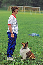 Rough Collie Looking At Owner