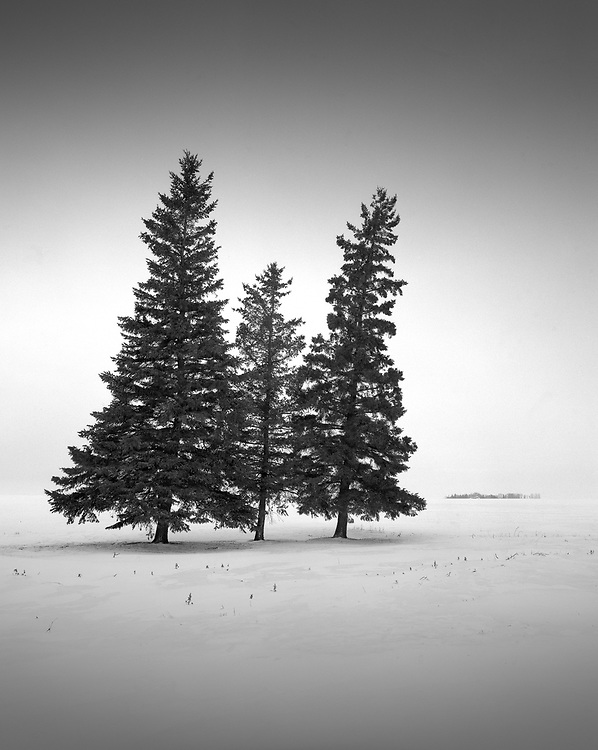Pines and Snow, Sovereign, SK