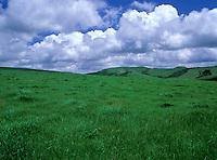 Green grassy hills, Point Reyes California