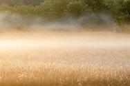 Morning fog in Goshen, N.Y., on Sept. 22, 2020.