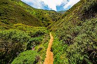 Hiking trail, Garrapata State Park, Monterey County, California USA