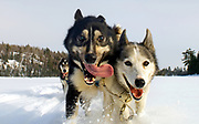 Sled dogs run across a frozen lake through Minnesota's Superior National Forest while on a winter camping trip with musher Arleigh Jorgenson