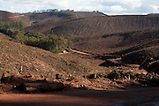 Pecanha_MG, 03 de Setembro de 2007...Projeto Beira de Estrada..Rota Vale do Rio Doce..Na foto, plantacao de eucaliptos...Foto: LEO DRUMOND / NITRO