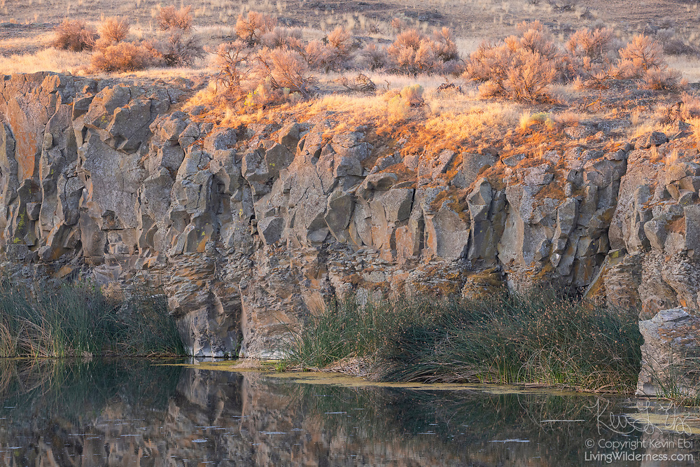 The first light of day illuminates the shrubs atop a basalt cliff that rises over a small pond in the Columbia National Wildlife Refuge in Adams County, Washington.