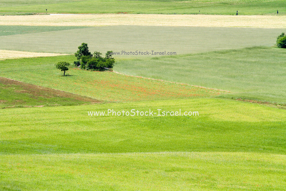 Rolling green hills with trees Photographed in Umbria, Italy