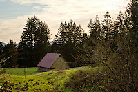 An old barn in a field on a green hillside with trees in the background