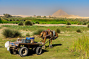Horse and cart standing at King Farouk Lake in Dahshur, with the Bent Pyramid in the background