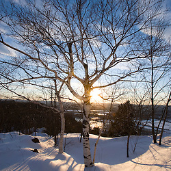 Late day sun and paper birch trees on Mount Holyoke in Hadley, Massachusetts.  Skinner State Park. New England Trail