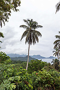 A palm tree rises above the jungle, Principe, Sao Tome and Principe<br /> Sao Tome and Principe, are two islands of volcanic origin lying off the coast of Africa. Settled by Portuguese convicts in the late 1400s and a centre for slaving, their independence movement culminated in a peaceful transition to self government from Portugal in 1975.