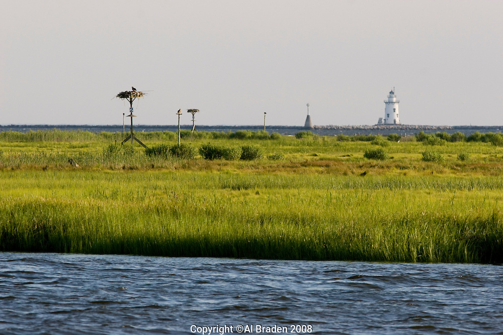 Osprey nests on Great Island, Old Lyme, CT, with Saybrook Jetty light in the background at the mouth of the Connecticut River.