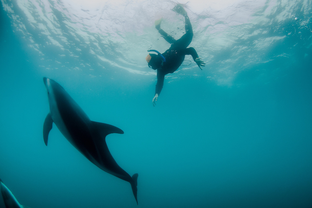 Cindy swims close to a Dusky Dolphin, New Zealand (2013).