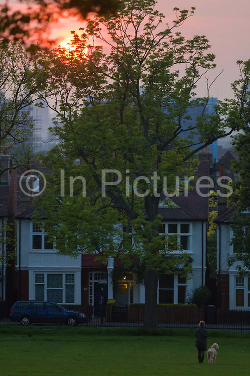 A lone woman walks her pet dog while enjoying a setting sun over Edwardian pertiod homes fronting a public park. As the glow from the setting sun sinks below the rooftops and the treetops of 100 year old ash, the woman enjoys her moment of peace and tranquillity with her obedient dog alongside.