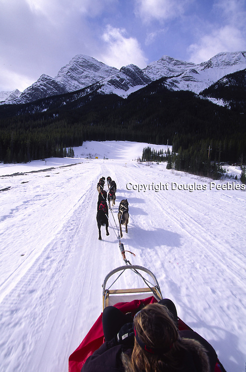Dog Sledding, Alberta Canada<br />