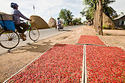 26 JUNE 2006 - CENTRAL CAMBODIA: Hot peppers set in the sun to dry after being harvested along Highway 6 between Phnom Penh and Siem Reap, Cambodia. Peppers and other vegetables are frequently dried along road sides in Cambodia.  PHOTO BY JACK KURTZ