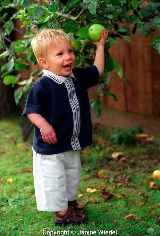 Child picking apple in garden