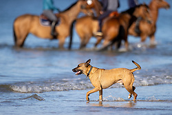 Who let the dogg out<br /> CSIO La Baule 2021<br /> © Hippo Foto - Dirk Caremans<br />  12/06/2021