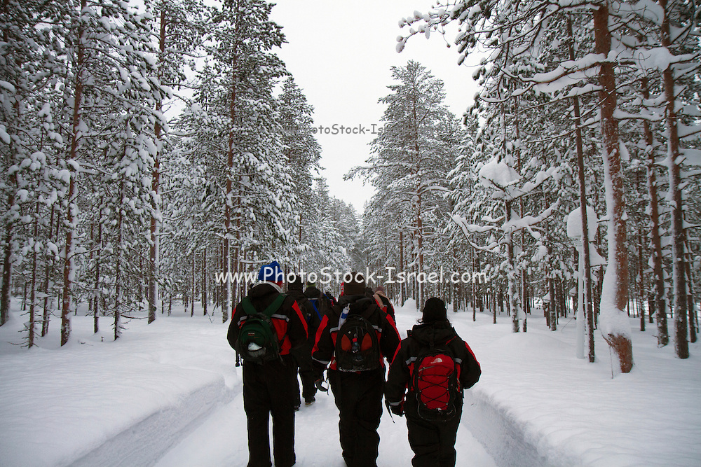 Eco tourism - a group hiking in the snow covered forest Lapland, Scandinavia