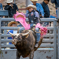 Bull rider Cody Jesus makes an 81-point ride during the Gallup Intertribal Indian Ceremonial Rodeo Chute Out Thursday at Red Rock Park in Gallup.