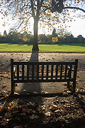 Empty bench and autumn leaves in Dulwich Park, London borough of Southwark. A setting mid-afternoon sun is behind a maple, whose leaves lie on the ground waiting to be swept up by council park keepers. In the background are many other species of trees and shrubs. Dulwich Park is a 30.85-hectare park in the London Borough of Southwark, south London, England, opened in 1890 by Lord Rosebery, initially designed by Charles Barry (junior), later refined by Lt Col J. J. Sexby (who also designed Battersea, Ruskin and parts of Southwark Parks). In 2004–6, the park was restored to its original Victorian layout, following a grant from the Heritage Lottery Fund.