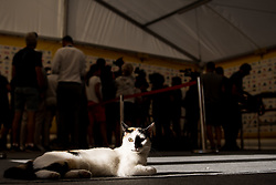 July 4, 2018 - Gelendzhik, Russia - 180704 A cat is lying on the floor during the mixed zone of the Swedish national football team during the FIFA World Cup on July 4, 2018 in Gelendzhik..Photo: Petter Arvidson / BILDBYRÃ…N / kod PA / 92081 (Credit Image: © Petter Arvidson/Bildbyran via ZUMA Press)