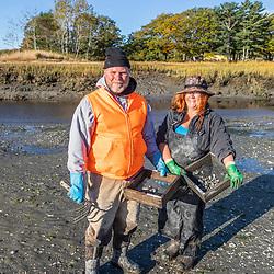 Biologists studies clam populations in Brunswick, Maine.