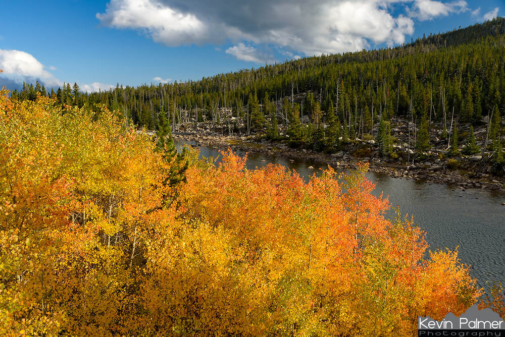 Fall colors are not very widespread in the Bighorn Mountains with the vast majority of trees being evergreens. But I found this colorful grove of quaking aspen trees a few weeks ago next to Long Lake. They are called quaking because of the way the leaves shake in the slightest breeze. Aspen trees are interesting because even though they appear to be individual trees, they are all clones of each other interconnected by an extensive root system. This means they are very hardy and able to quickly grow back after forest fires. Some of the largest and oldest organisms on Earth are groves of aspen trees.